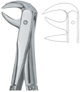 Tooth Ext Forceps